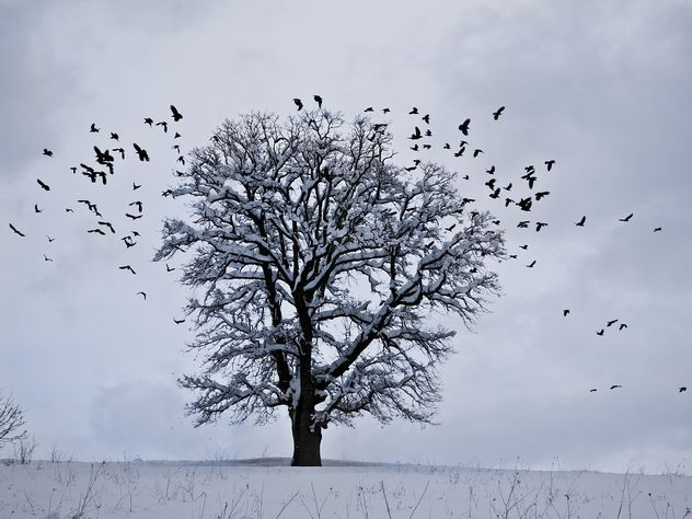 Мокрый снег иплюсовая температура ожидают жителей столицы ввоскресенье