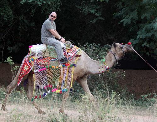 Для свадебной церемонии организаторы пригнали верблюдов...