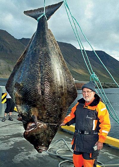 70-летний Гюнтер и 220-килограммовый палтус нашли друг друга