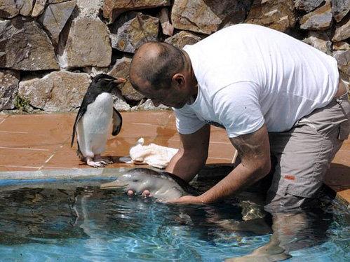 Спасенный дельфиненок на руках у Ричарда Тэсоре, директора морского заповедника «SOS Fauna Marina»
