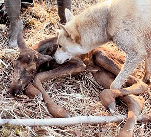 Сиротку выходила семья ВИКТОРКИНЫХ, а нашёл на пожарище их верный пёс