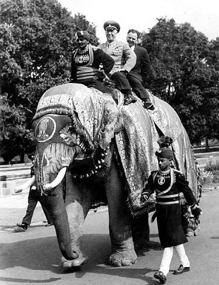 Лихой кавалерист мог запросто оседлать даже слона