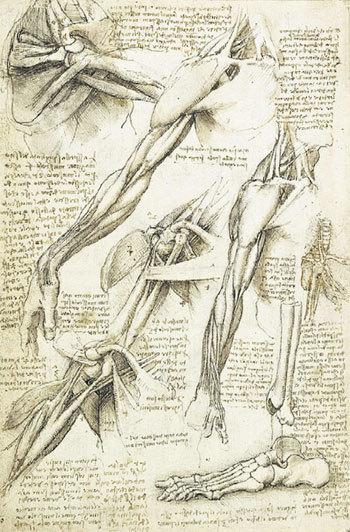 Подробные анатомические рисунки, комментарий и список покупок - всё в одном блокноте, датированном 1511 годом