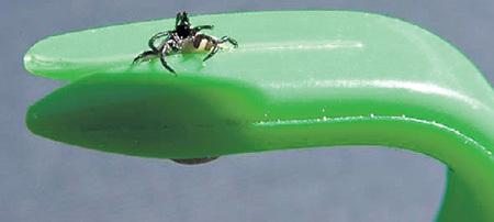 3.Крючок для удаления клеща похож на гвоздодер. В комплект входят два крючка для удаления разноразмерных особей...