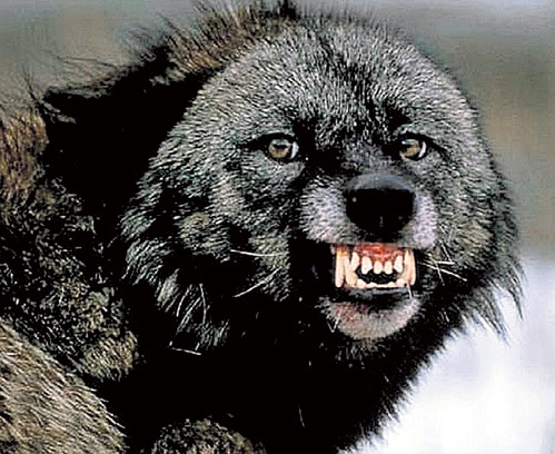 Если на вас пошёл медведь, не поворачивайтесь к нему спиной и не убегайте - вы обречены. Встретьте опасность лицом к лицу