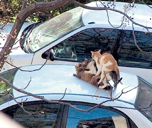 Спасибо, кот автора письма ещё подружек на крышу не позвал