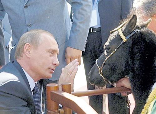 Став хозяином миниатюрного Вадика, Президент России Владимир ПУТИН задал модный тренд для любителей лошадей. Фото: РИА «Новости»