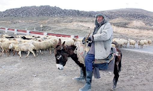 Чтобы добраться до села, жители используют ушастый «транспорт»