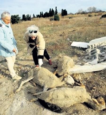 Жительницы Перпиньяна оплакивают жертв сексуального надругательства. Фото с сайта metatv.org