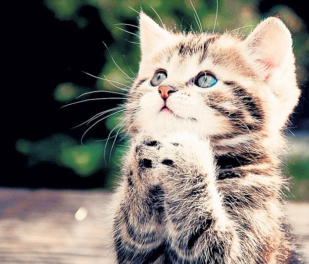 Просмотр умильного видео с котиками - не безделье, а эффективная психотерапия, считают учёные