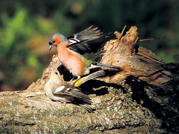 Фото с сайта birdchuvashia.livejournal.com