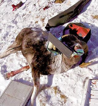 Обломки вертолёта рядом с убитым архаром - факт вопиющей людской жестокости (фото 12.guns.ru)