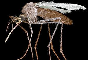 Злостное насекомое