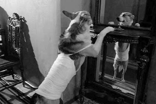 Кадр из фильма «Собачье сердце». На роль булгаковского Шарика выбрали дворнягу по кличке Карай