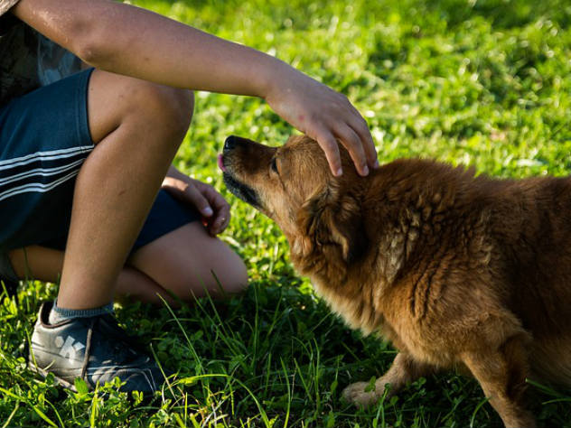 От экземы и астмы ребенка защитит собака