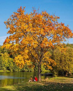 Осень в московском парке Царицыно