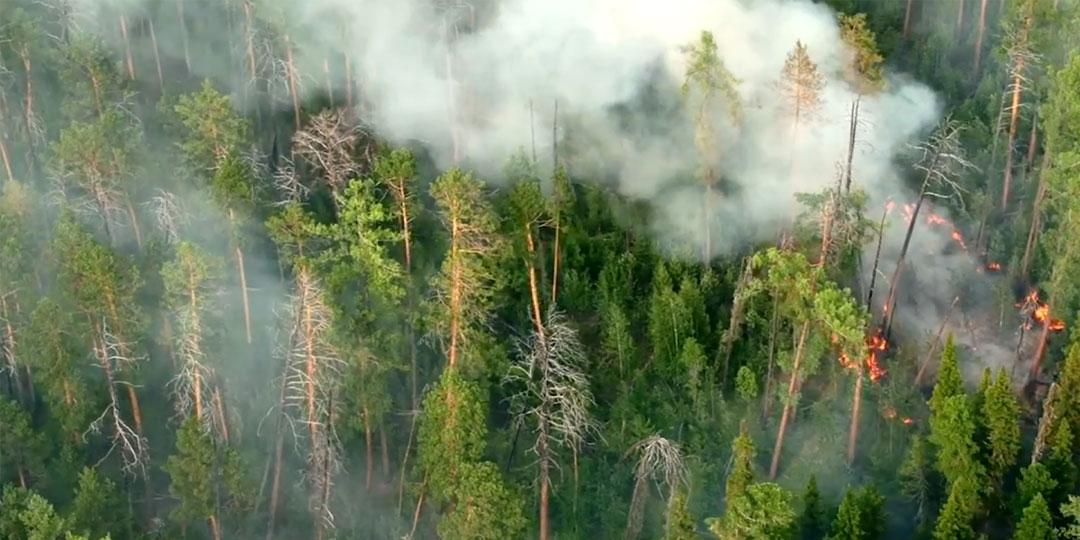 Лесные пожары в Красноярском крае. Фото:© «ИТАР-ТАСС»