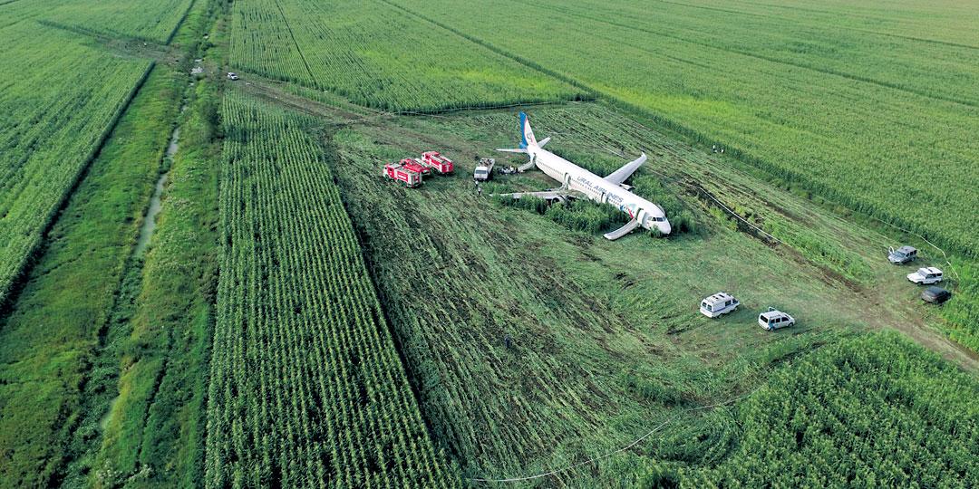 Попав на взлете в стаю чаек, А321 экстренно приземлился в районе деревни Рыбаки
